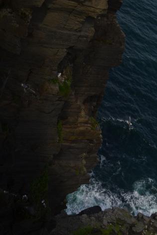 birds nesting on cliffs2